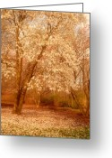 Easter Flowers Greeting Cards - Hear the Silence - Holmdel Park Greeting Card by Angie McKenzie