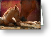 Quarter Horse Photo Greeting Cards - Heart of Hearts Greeting Card by Karen Slagle