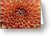 Orange Flower Photo Greeting Cards - Heart Of Orange Dahlia Greeting Card by Achim Mittler, Frankfurt am Main