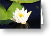 Lilly Pad Greeting Cards - Heart of the Lilly Greeting Card by Wild Expressions Photography