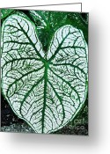 Green And White Greeting Cards - Heart Shaped Leaf Greeting Card by Sarah Loft