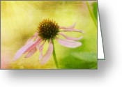 Cone Flower Greeting Cards - Hearts Desire Greeting Card by Lois Bryan