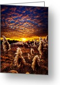 Winter Sun Greeting Cards - Heaven and Earth Greeting Card by Phil Koch