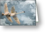 Sly Greeting Cards - Heavenly Flight Greeting Card by Reflective Moments  Photography and Digital Art Images