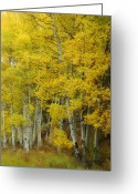 Colors Of Autumn Greeting Cards - Heavenly Light Greeting Card by Donna Blackhall