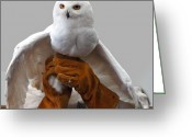 Snowy Night Greeting Cards - Hedwig Harry Potters pet Greeting Card by LeeAnn McLaneGoetz McLaneGoetzStudioLLCcom