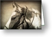 Caballo Greeting Cards - Heedful Greeting Card by Christine Hauber