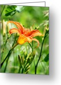 Wildflower Photograph Greeting Cards - Heightened Awareness  Greeting Card by Neal  Eslinger