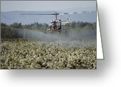 Pacific Coast States Greeting Cards - Helicopter Spraying Apple Orchards Greeting Card by Sisse Brimberg