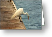 Egret Digital Art Greeting Cards - Hello Down There Greeting Card by Methune Hively