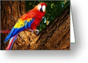 Amazon Parrot Greeting Cards - Hello Greeting Card by Garry Staranchuk