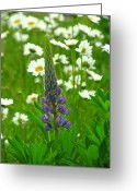 Fine Art Flower Photography Greeting Cards - Hello Stranger Greeting Card by Juergen Roth