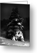 Snowy Night Digital Art Greeting Cards - Hello Winter Greeting Card by Lj Lambert