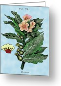 Retro-montage Greeting Cards - Henbane Greeting Card by Ziva
