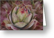 Plants Pastels Greeting Cards - Hens and Chicks Greeting Card by Joanne Grant