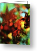 Bittersweet Photo Greeting Cards - Her Autumn Eyes Greeting Card by Rebecca Sherman