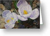 - Harlan Greeting Cards - Heralds of Spring Greeting Card by - Harlan