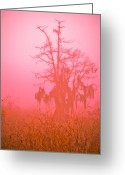 Foggy Morning Greeting Cards - Here I Stand Greeting Card by Carolyn Marshall