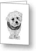Dog Prints Drawings Greeting Cards - Heres NICO Greeting Card by Jack Pumphrey