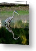 Heron.birds Greeting Cards - Heron 20 Greeting Card by Peter Gray