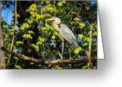 Heron Greeting Cards - Heron Greeting Card by Everet Regal