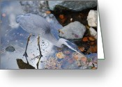 Collage On Wood Greeting Cards - Heron Fishing Photograph Greeting Card by Don  Wright