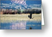 Flood Greeting Cards - Heron In Flight Greeting Card by Harpazo_hope