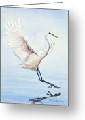 Landing Painting Greeting Cards - Heron Landing Watercolor Greeting Card by Michelle Wiarda
