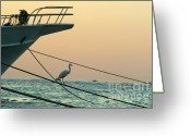 Cruise Ships Greeting Cards - Heron on boat rope at sunrise on the Red Sea Greeting Card by Sami Sarkis