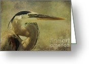 Textured Art Greeting Cards - Heron On Texture Greeting Card by Deborah Benoit