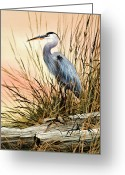 Wildlife Greeting Cards Prints Painting Greeting Cards - Heron Sunset Greeting Card by James Williamson