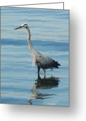 Ken Sjodin Greeting Cards - Heron53 Greeting Card by Ken  Sjodin