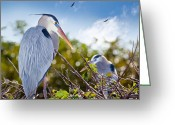 Blue Heron Photo Greeting Cards - Herons at Rest Greeting Card by Michelle Wiarda