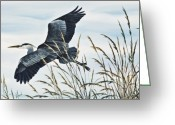 Wildlife Greeting Cards Prints Painting Greeting Cards - Herons Flight Greeting Card by James Williamson