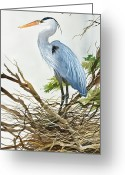 Wildlife Greeting Cards Prints Painting Greeting Cards - Herons Nest Greeting Card by James Williamson