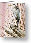 Wildlife Greeting Cards Prints Painting Greeting Cards - Herons Watch Greeting Card by James Williamson
