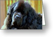 Dog Prints Photo Greeting Cards - Hes so cute Greeting Card by Lisa Rose Musselwhite