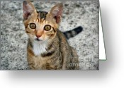 Hong Kong Greeting Cards - Hi Pretty Kitty Greeting Card by Kathy Daxon