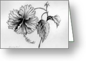 Hibiscus Tropical Drawings Greeting Cards - Hibiscus Ballet Greeting Card by Deborah Willard