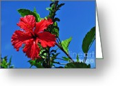 Textured Floral Greeting Cards - Hibiscus in the Sky 2 Greeting Card by Kaye Menner