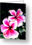 Hibiscus Tropical Drawings Greeting Cards - Hibiscuses Greeting Card by Laura Bell