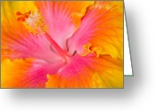 Conservatory Photo Greeting Cards - Hibuscus Splash Greeting Card by Eggers   Photography
