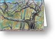  Parks Drawings Greeting Cards - Hidden Oak and Canyon in Briones Park Greeting Card by Asha Carolyn Young