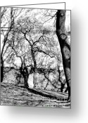 Bw Pyrography Greeting Cards - Hidden tree Greeting Card by Matthias Siewert