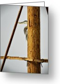 Heron.birds Greeting Cards - Hide and Seek  Greeting Card by Saija  Lehtonen