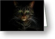 Whiskers Greeting Cards - Hiding In The Dark Greeting Card by Lori Seaman
