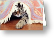 Camera Greeting Cards - Hiding Tabby Cat Greeting Card by Hulya Ozkok