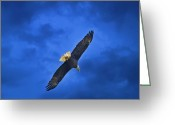 Reelfoot Lake Digital Art Greeting Cards - High And Lifted Up Bald Eagle Greeting Card by J Larry Walker