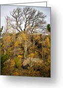 Autumn Photographs Greeting Cards - High Country Autumn View Greeting Card by James Bo Insogna