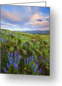 Lupine Greeting Cards - High Desert Spring Greeting Card by Mike  Dawson